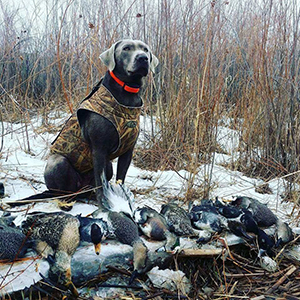 Dog with Ducks by Tanner Diamond, courtesy of the Utah Division of Wildlife