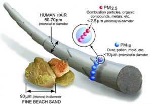 Diagram showing how PM2.5 compares in size to a human hair.