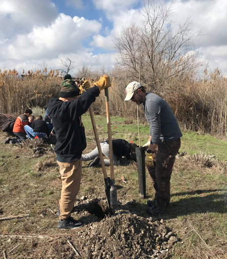 teams planting trees along Utah's Jordan river