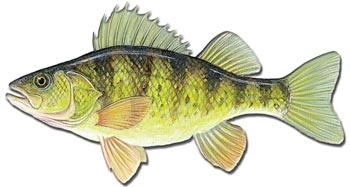 By Fish Species: Utah Fish Advisories - Utah Department of ...