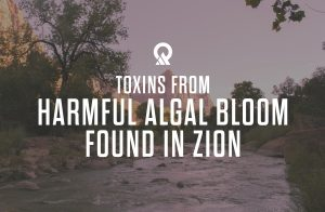 Toxins from Harmful Algal Bloom Found in North Fork of the Virgin River in Zion National Park